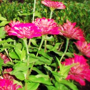 English Gardener Newsletter – JUNE 2019